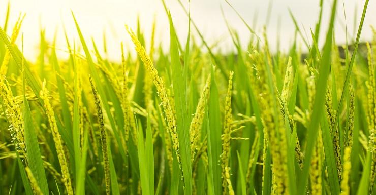 人源化生物原料產製平台